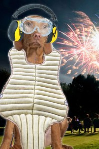Dog at fireworks show wearing earmuffs, goggles, and baseball catcher's chest protector