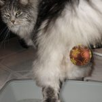 Litterbox Ornaments: Safe Sanitary Grooming Tips for Dogs and Cats