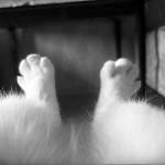 DIY Home Grooming Guide, Part 4: Legs, Feet, Nails