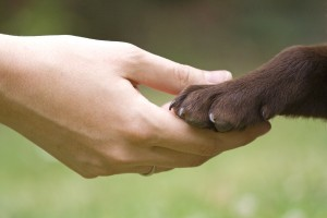 The feet require regular examination to ensure that nothing compromises your pet's ability to walk and run.