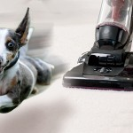 Bad Vibrations: When Your Pet Fears Vacuums, Clippers and All Things Growly
