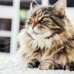 Cat Grooming Guide: Coat Care