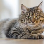 Cat Grooming Guide: Beyond the Coat