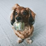 Save Money By Developing Affordable Pet Grooming Habits