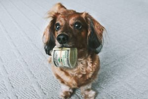 Dog with roll of hundred dollar bills in its mouth